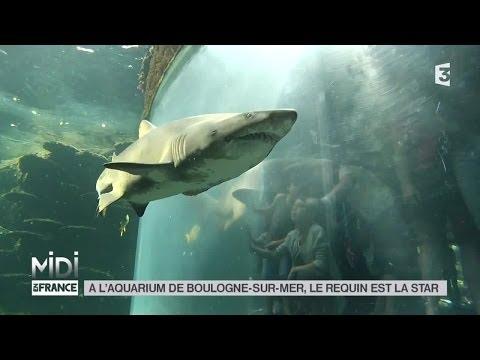 ANIMAUX : À l'aquarium de Boulogne-sur-Mer, le requin est la star