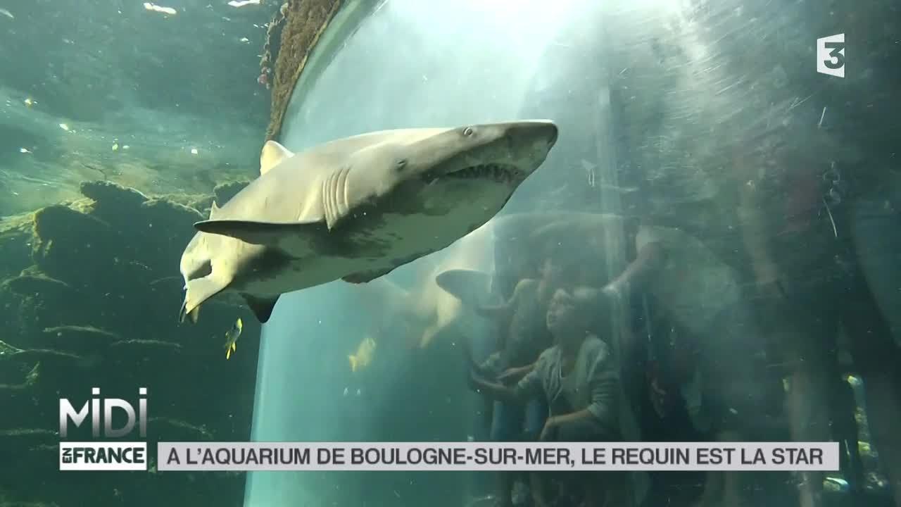 animaux l 39 aquarium de boulogne sur mer le requin est la star youtube. Black Bedroom Furniture Sets. Home Design Ideas