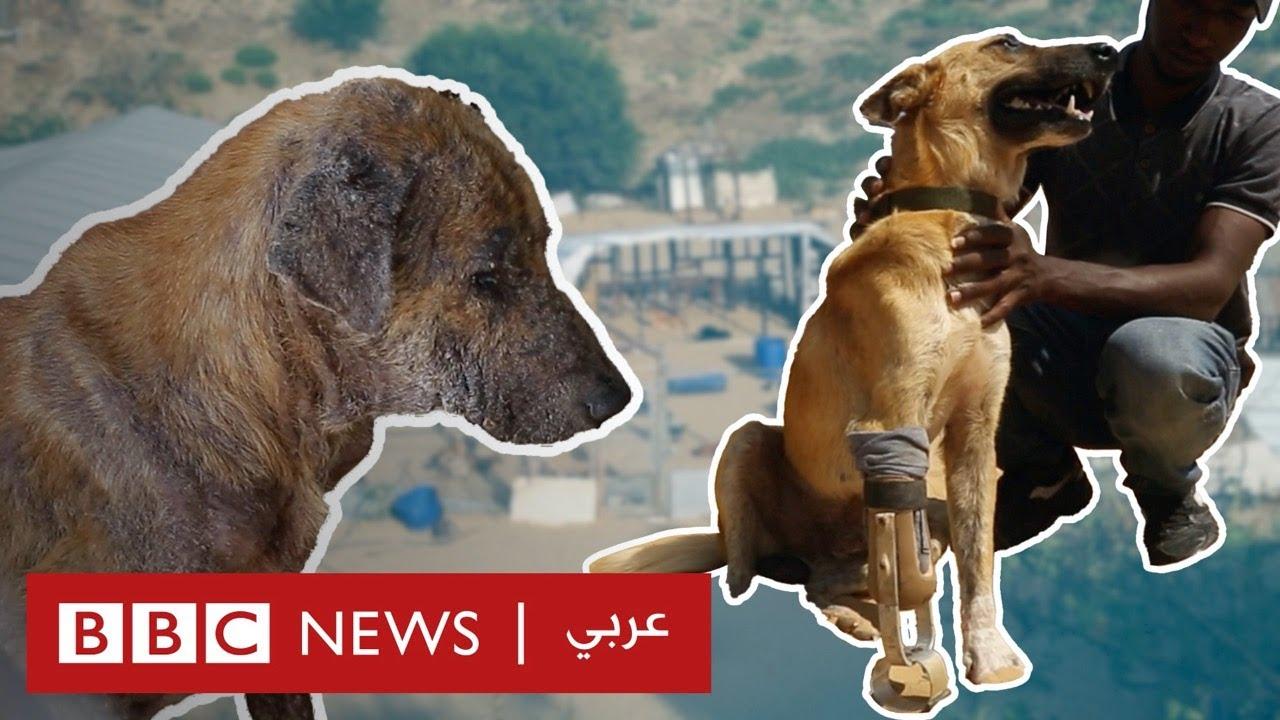 الحيوانات شاهدة وضحية على الصراع بين إسرائيل والفلسطينيين  - نشر قبل 2 ساعة