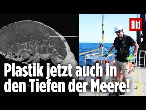 Plastik In Kleinem Tiefsee-Krebs Nachgewiesen!