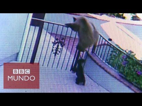 VIDEO: Perrita vs tres osos ¿quién ganó?