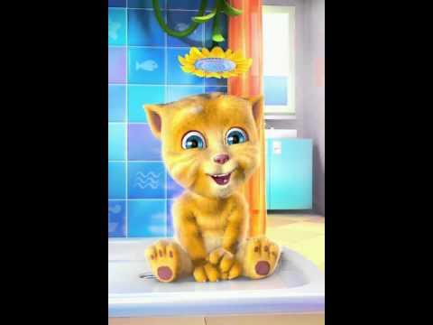 gatinho cantor