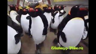 Прикольные пингвины в метро