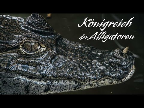 Königreich der Alligatoren Tierfilm Krokodile, Tierdoku für Kinder, Schulfilm, Lehrfilm, deutsch