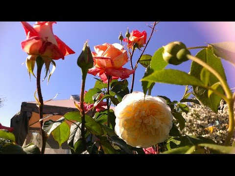 Стихи про весну -