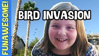 BIRD INVASION & PIANO RECITAL