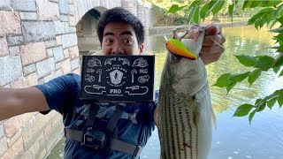HUGE RARE FISH CAUGHT WHILE URBAN FISHING!!! (Surprise Ending)