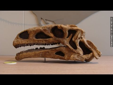 Why Plant-Eating Dinos Might Have Avoided The Equator