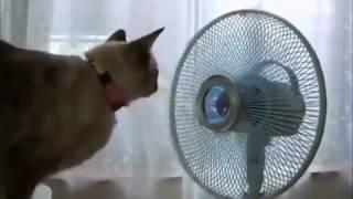 ржачные кошки