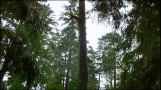 Wildly Alive: Lush, Ancient Rainforests with Shane Koyczan in BC thumbnail
