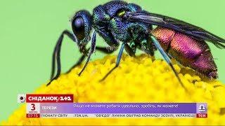 Чому в комах кінцівки еволюціонували в щелепи – Популярна наука