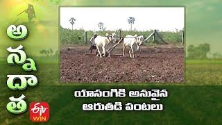 యాసంగికి అనువైన ఆరుతడి పంటలు | Summer ID crops as an alternate to Paddy | ETV