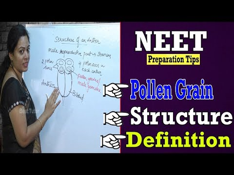 Pollen Grain : Definition,Structure & Function   Lessons For NEET   Medical Classes   Best Tutor