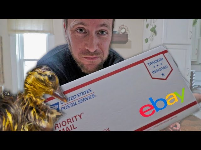 The rarest duckling on eBay