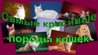 *** КОШКИ ***///Самые красивые породы кошек///