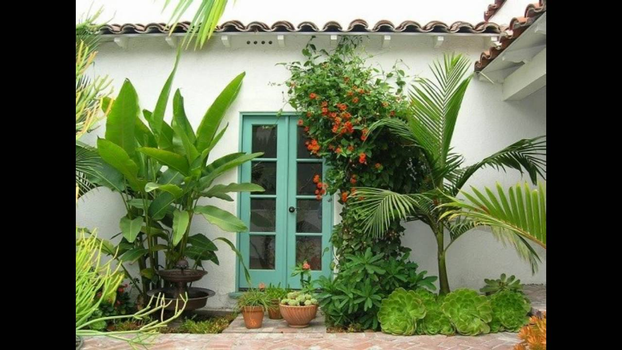 Plantas para jardines tropicales youtube for Plantas coloridas para jardin