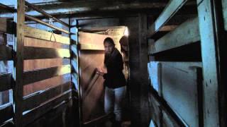 The Cellar - official trailer