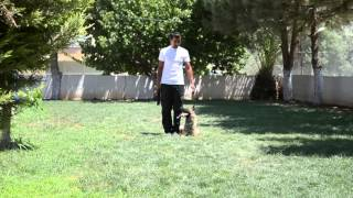 Simba-k9 Dog Sport& Dog Training Services