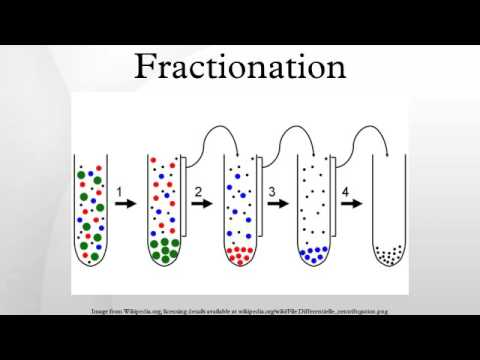 what is the process of cell fractionation