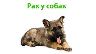 Рак у собак. Ветеринарная клиника Био-Вет