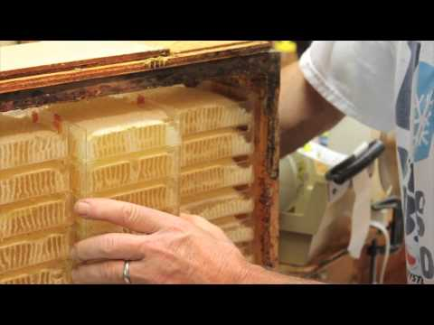 Unique Process of Herman's Honeycomb