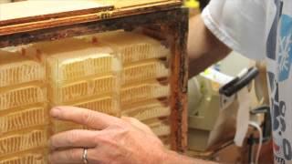 Unique Process of Herman's Honeycomb
