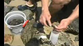 Mussel Quarantine, May to October - LA County Dept. of Public Health - English