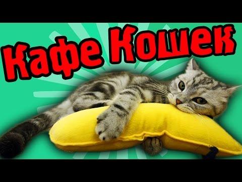 видео: КАФЕ КОШЕК