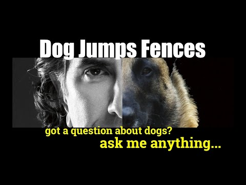 How to Keep Dogs from Jumping a Fence - ask me anthing