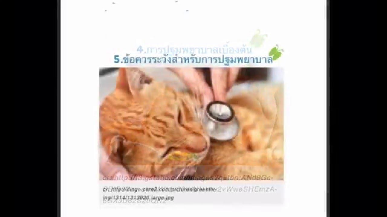 การเล ยงแมว แมวไม สบายทำอย างไร Youtube ส ตว เล ยง