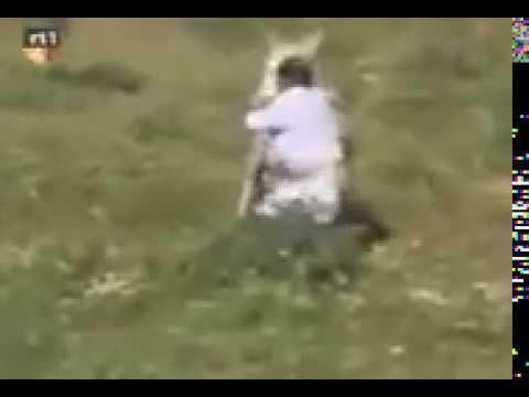 Man raped by a donkey! thumbnail