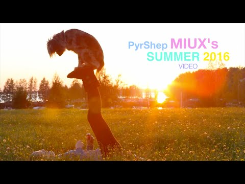PyrShep MIUX 's summer 2016 video ( Amazing Dog Tricks )