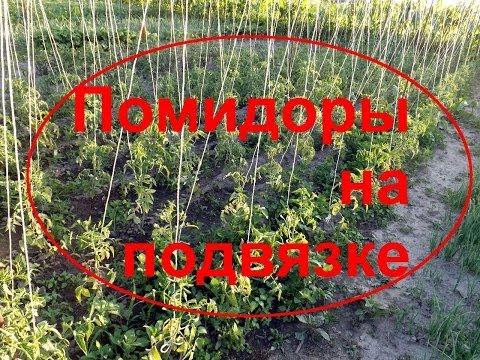 ПОМИДОРЫ!Конструкция для высокорослых помидоров!