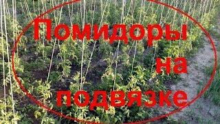 ПОМИДОРЫ!Конструкция для высокорослых помидоров!(Своевременная и правильная подвязка помидоров — залог хорошего урожая, ведь если кусты не подвязаны, они..., 2014-07-01T20:29:19.000Z)