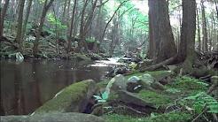 Small stream fishing, Poconos, PA