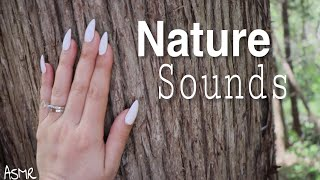 Relaxing nature sounds | Walk with me through the forest