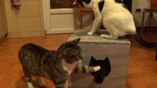 Лучшие игрушки для кошек своими руками
