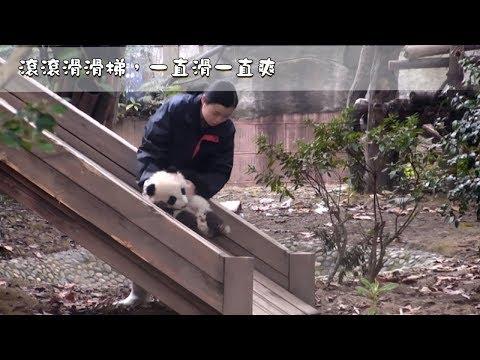 《熊貓主題趴》滾滾滑滑梯,一直滑一直爽 | iPanda熊貓頻道