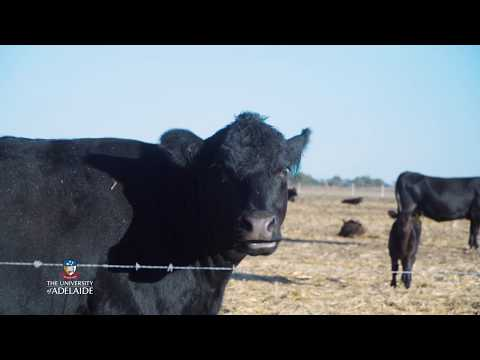 Tour The Production Animal Health Centre - The University Of Adelaide