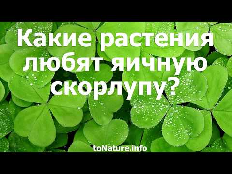 Какие растения любят яичную скорлупу?