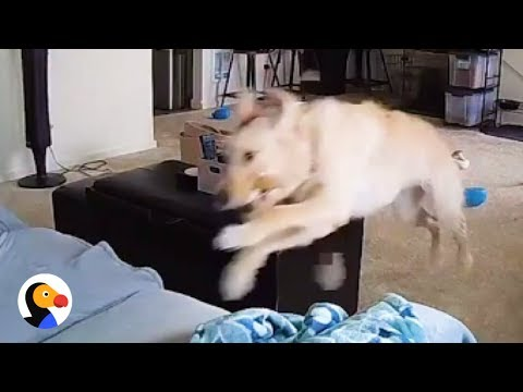 Dogs Home Alone CAUGHT ON TAPE | The Dodo