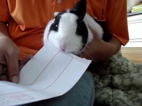 我的兔子會拆信 - YouTube