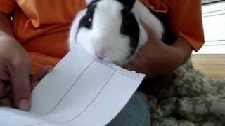 我的兔子會拆信