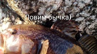 Ловля бычка на Черном море с берега весной
