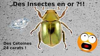 Les plus beaux insectes d'élevage !