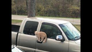 想像を超えた場所にいる猫ちゃんがじわじわ面白いw~A Cat In A Place Beyond Imagination Is Interesting.