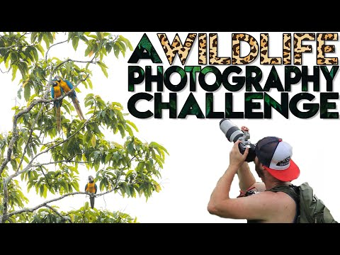 The HARDEST Place For Wildlife Photography?