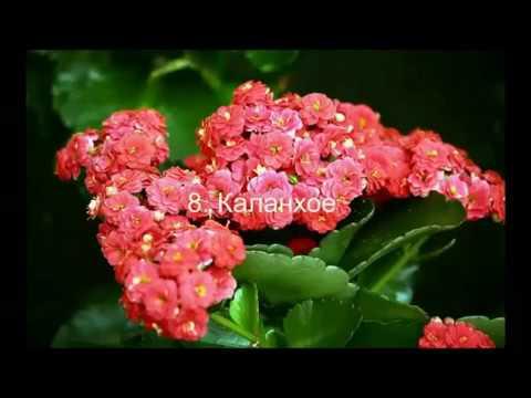 Каталог Комнатные растения и цветы Описание с фото Цветы