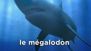 Mégalodon : Le Mois des Monstres