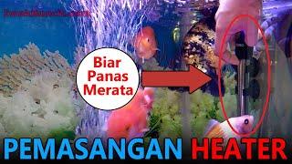 Biar Panas Merata Inilah Tata Cara Pemasangan Heater Pada Aquarium Ikan Mas Koki Yang Benar Youtube